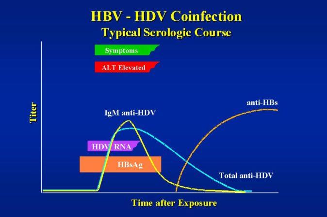 Hepatit B Antikoru