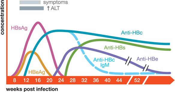 anti hbs değerleri