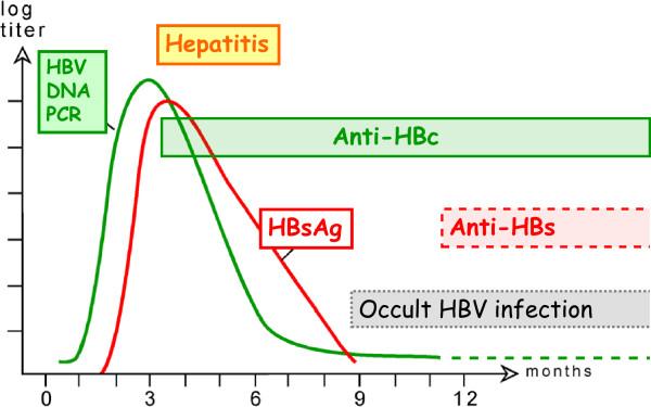 hepatit b pozitif ne demek
