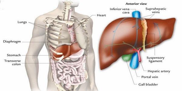 Karaciğer Büyümesi Nedenleri