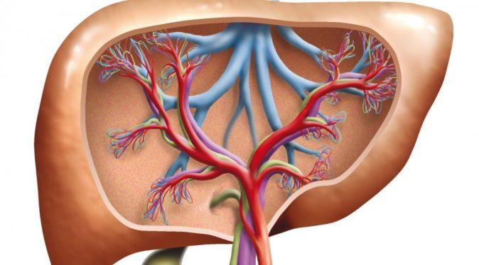 karaciğer enzim yükseliği