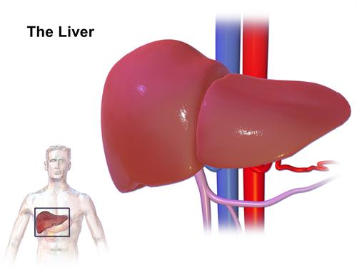 Karaciğer Hemanjiom riskleri