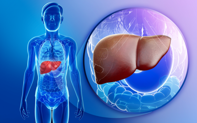 karaciğer yağlanmasına bakan bölüm