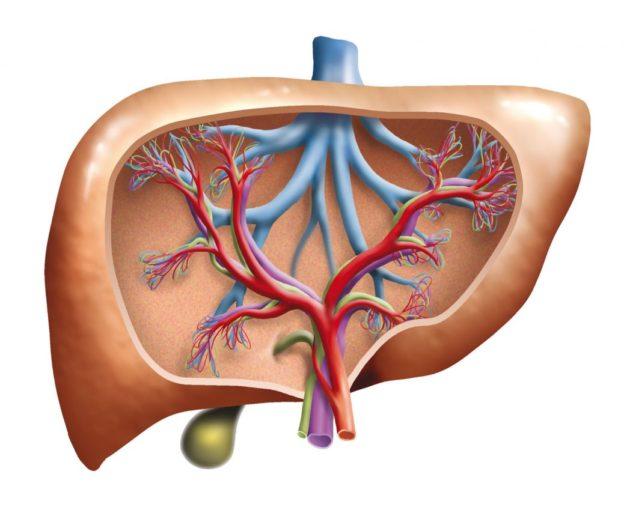 karaciğerde lezyon tanımı